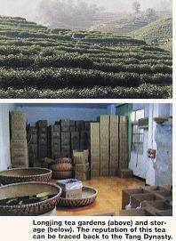 longjing tea gardens